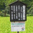 不耕起米の田んぼ