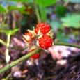 森の冬の赤